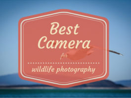 Best camera for wildlife photography